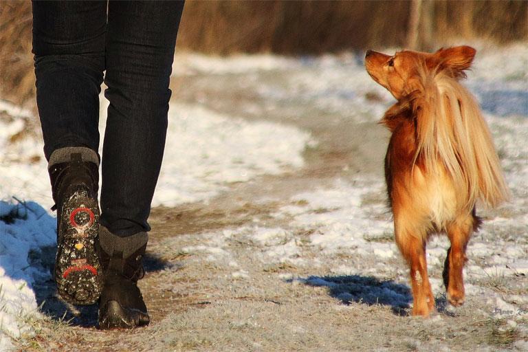 Einzelunterricht Hundeschule Markkleeberg